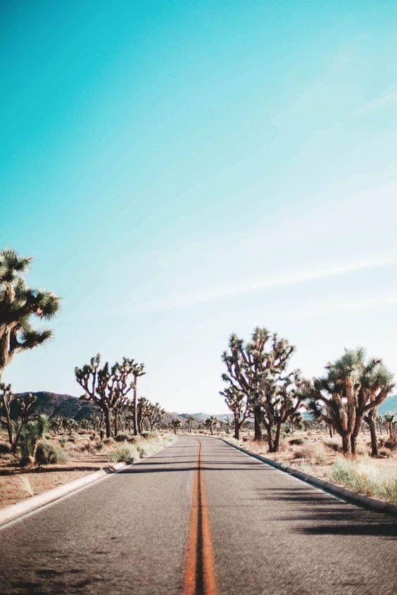 California. Palm springs