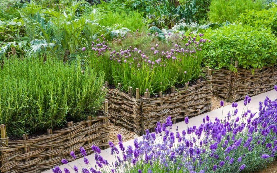 дачные травы и их названия с фото комплекса