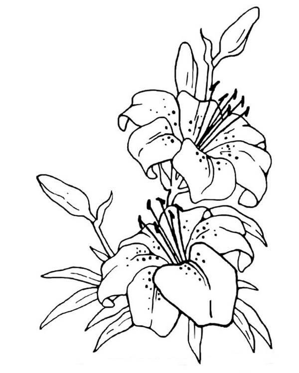 Flower Drawing Coloring Page Netart Flower Drawing Drawings