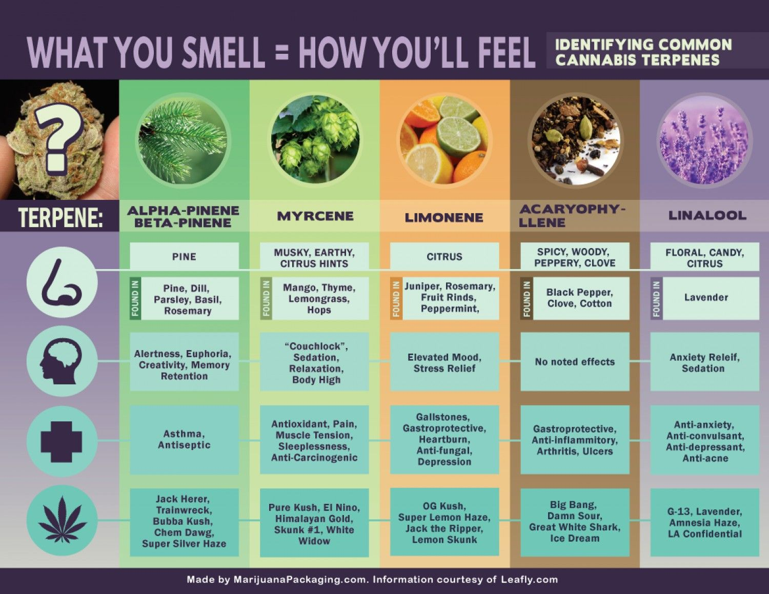 Cannabis terpenes what you smell is how  ll feel infographic also rh pinterest