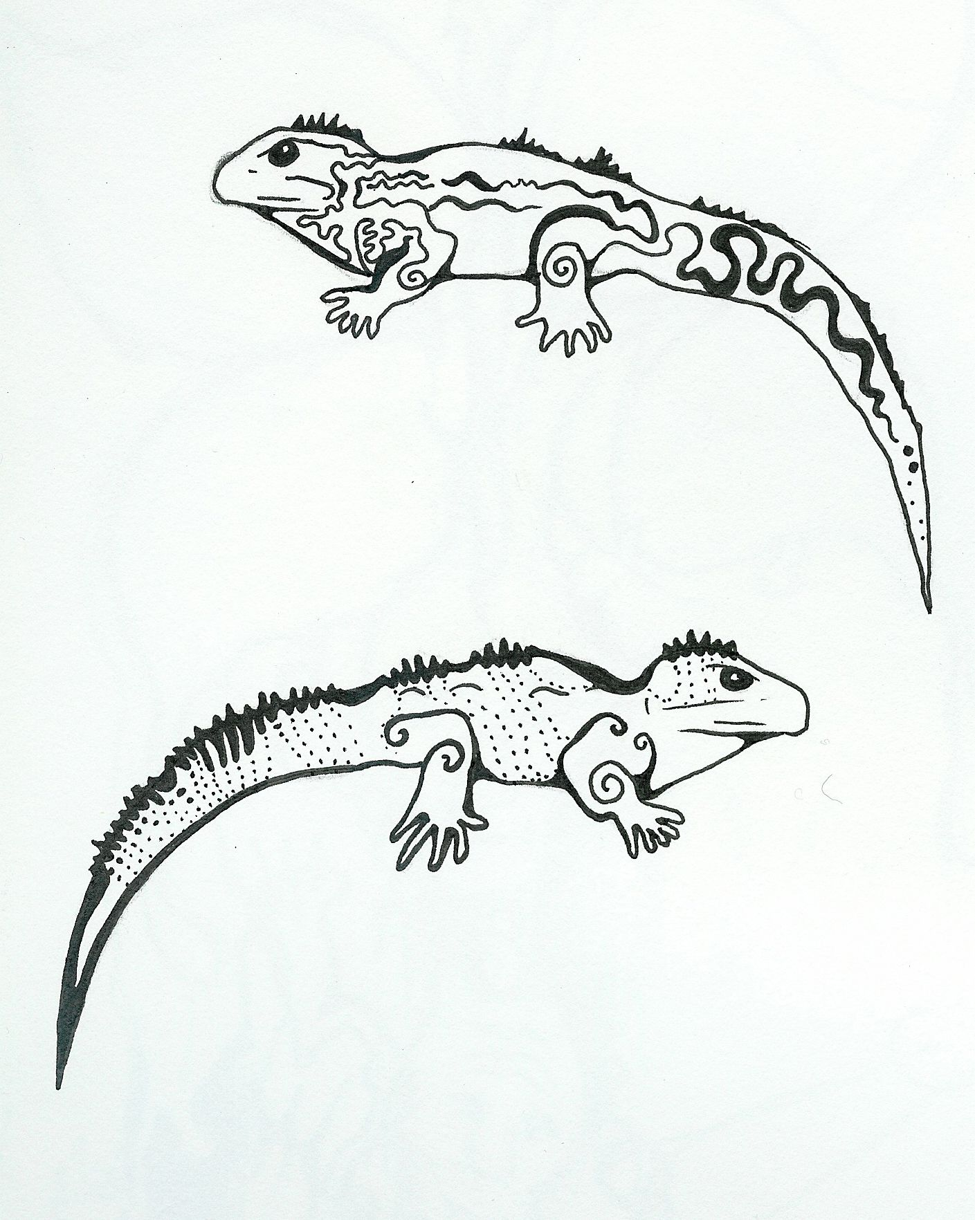 Tuatara Black And White Drawing A (1409× Design Inspirations