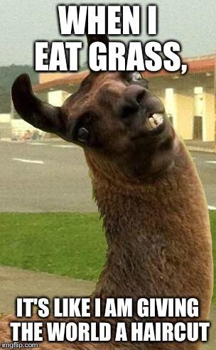 Online Fashion Shop For Women Men Kids Alpaca Funny Funny Llama Funny Animal Memes