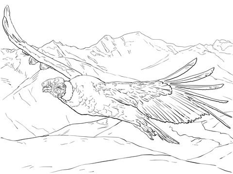 Cóndor andino volando Dibujo para colorear | Tatuajes | Pinterest ...