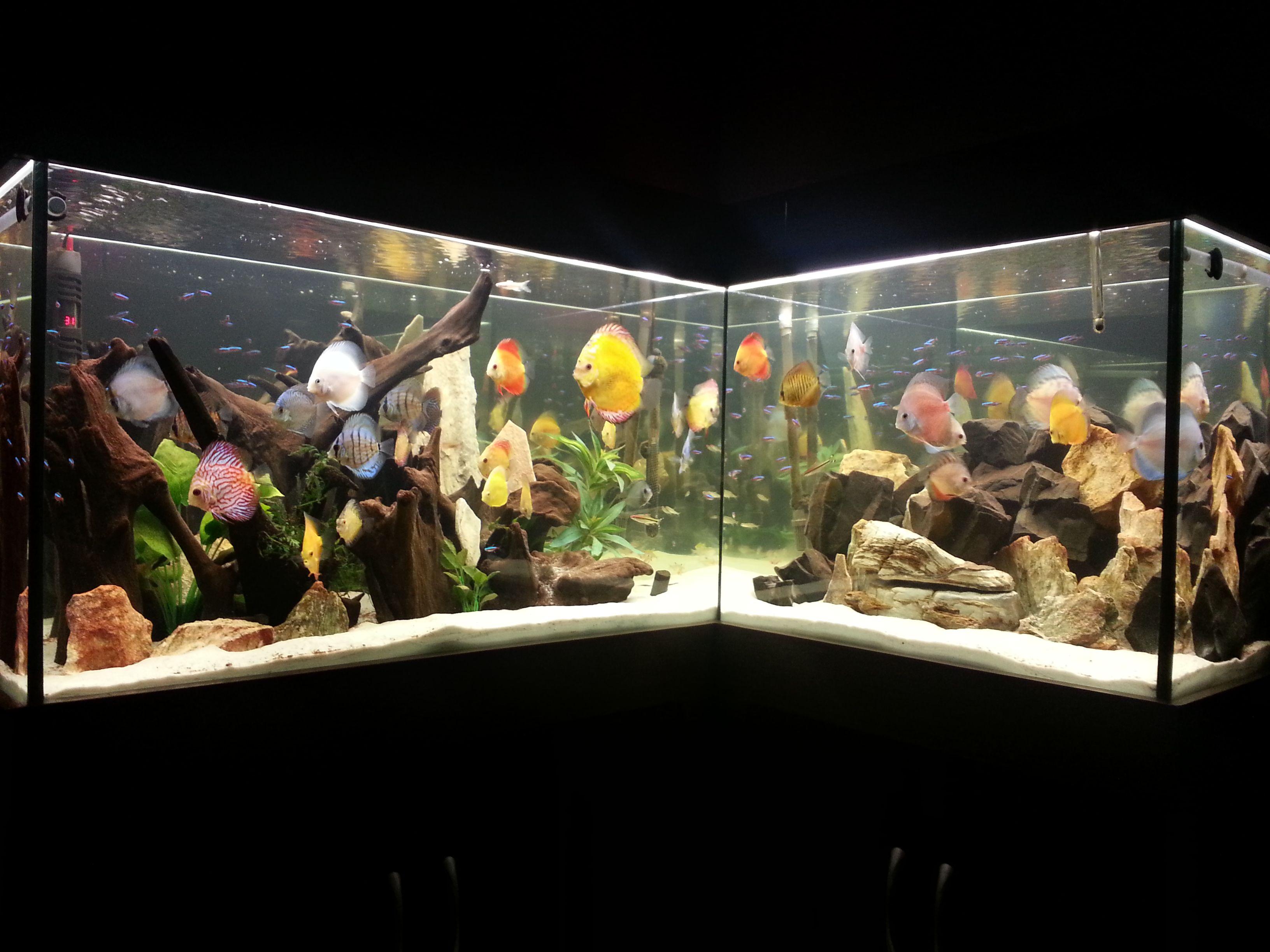 53c834ed5c0ce6346ed877ad21671b86 Frais De Aquarium 450 Litres Des Idées