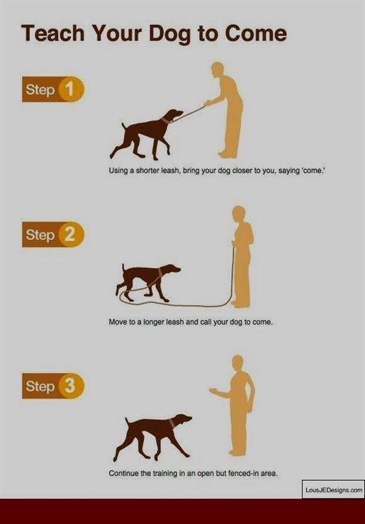 Dog Training Bells For Door Peter Caine Dog Training Tosh 0