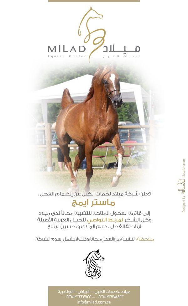 صحيفة الأصالة الإلكترونية Horses Arabian Horse Arabians