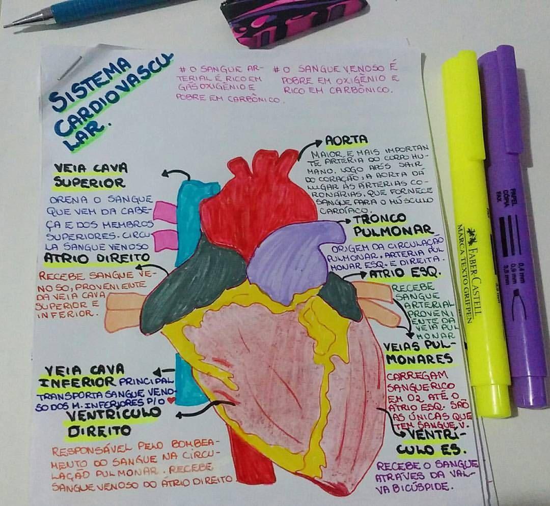 Bom dia!!!!! Mais um mapa de biologia. ⏺Fisiologia humana!⏺Sistema ...