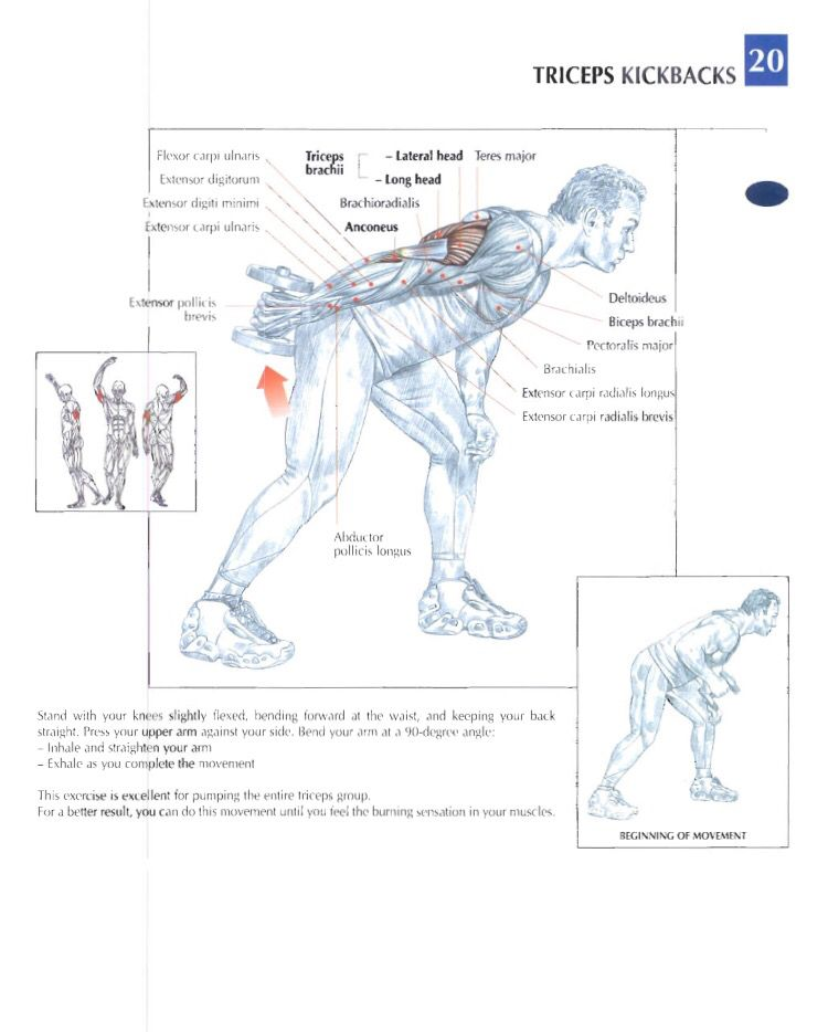 Triceps kickbacks | Training anatomy (Arms) | Pinterest