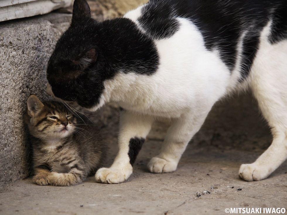 Pin By Kristen Johnson On Cute Kitties Pinterest Cat Animal - 28 adorable cat mums proud of their tiny kittens