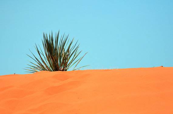 Yucca and Coral Sand Coral Pink Sand Dunes Utah by blindwolfspirit, $10.00