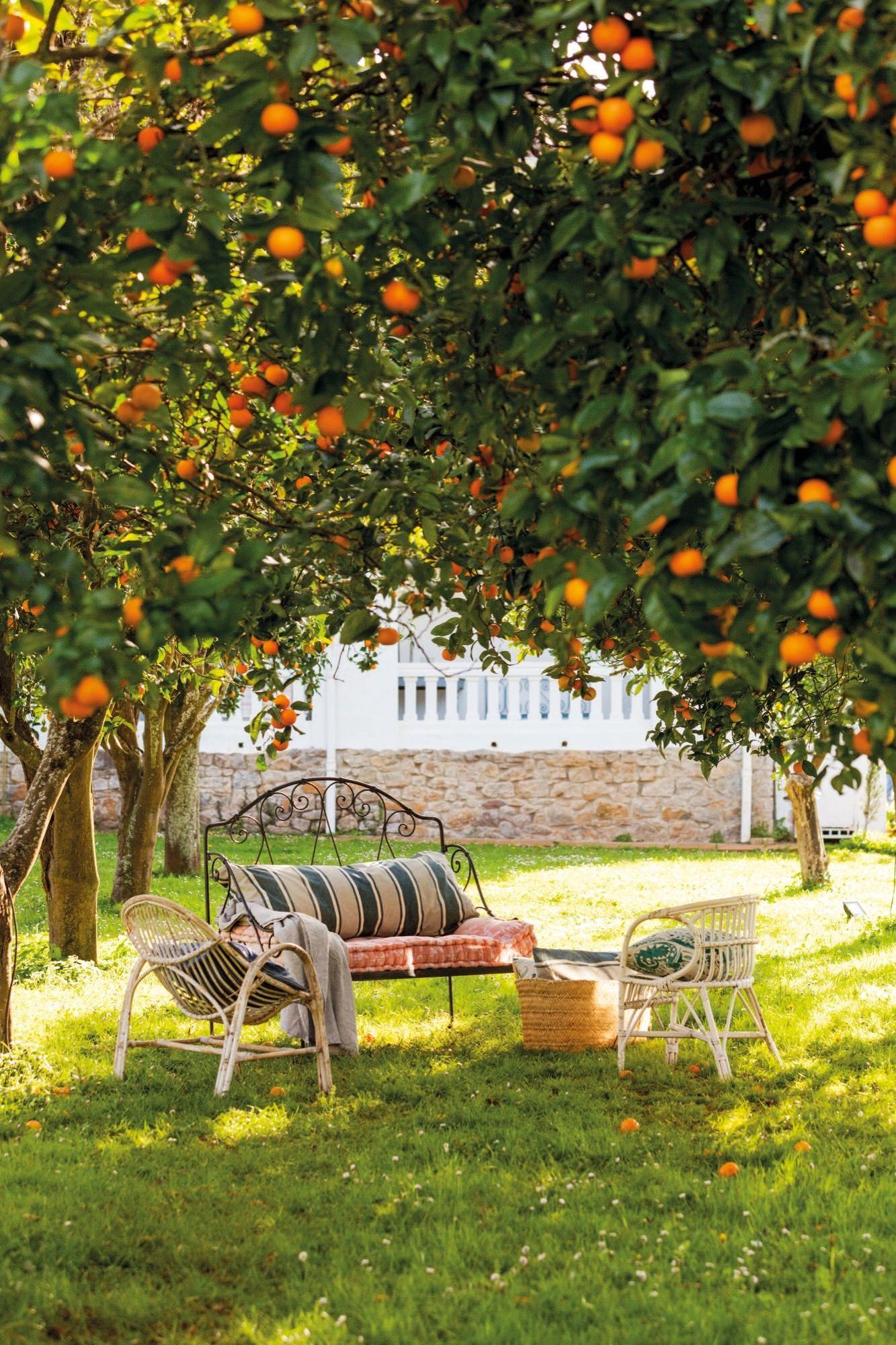 Nikon Muebles De Jardin - Muebles De Jardin Bajo Los Arboles En Casa De Federica Co [mjhdah]https://i.ebayimg.com/images/i/253012284662-0-1/s-l1000.jpg
