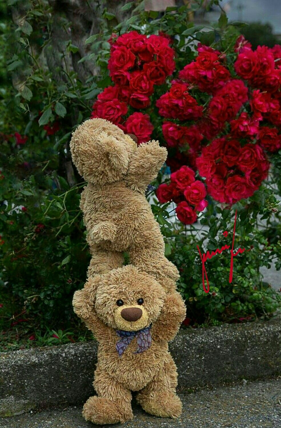 Анимашки розы, картинка плюшевый мишка с цветами