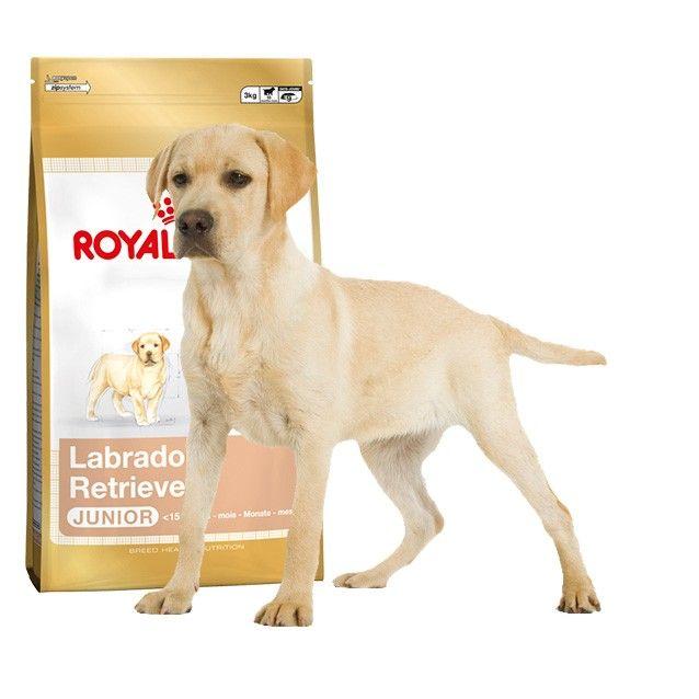 Inicio Perros Cachorros Tienda De Mascotas
