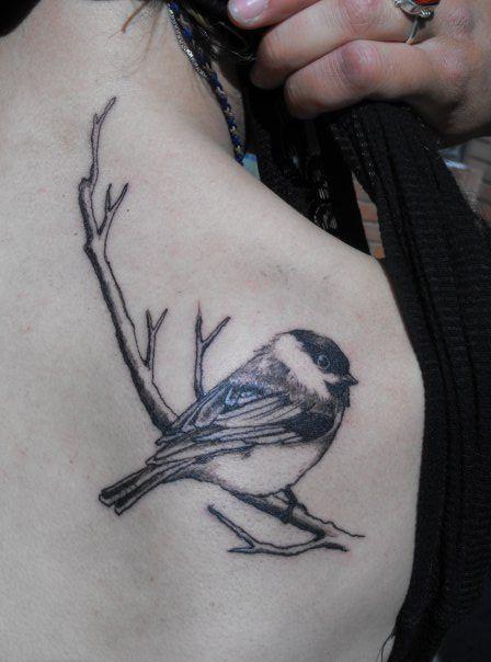 Beautiful Realistic Chickadee Tattoo By Australian Realism: Chickadee - Cover Up For My Back