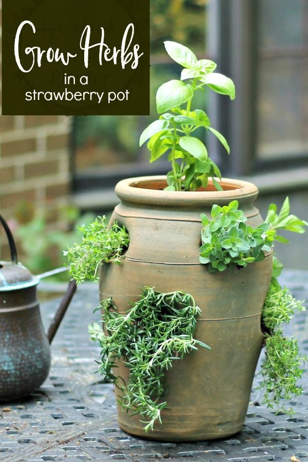 Growing Herbs in a Strawberry Pot for Easy Access and Small Spaces #herbsgarden