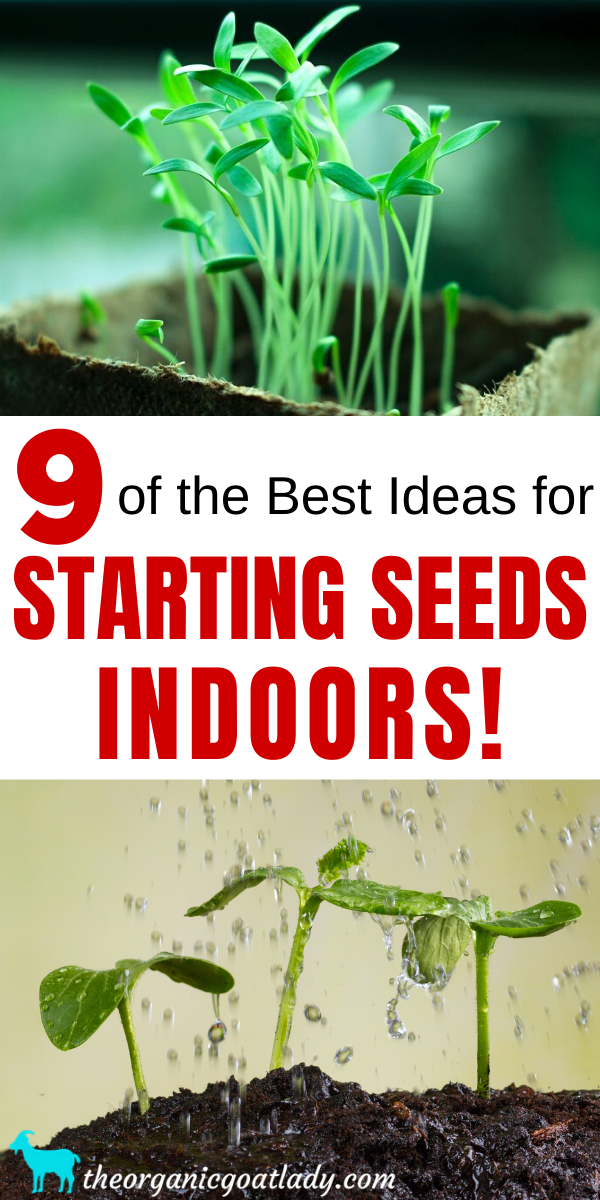 9 Ideas For Starting Seeds Indoors The Organic Goat Lady Starting Seeds Indoors Seed Starting Seeds