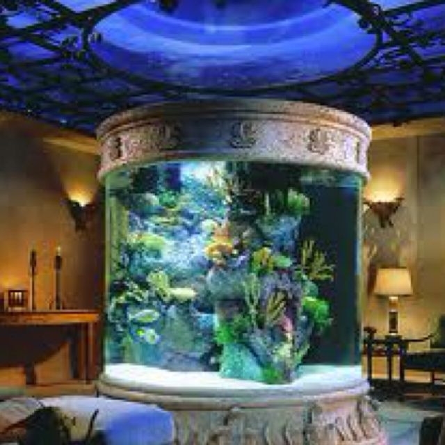 Everyone needs a salt water tank | House Ideas | Pinterest | Salt ...