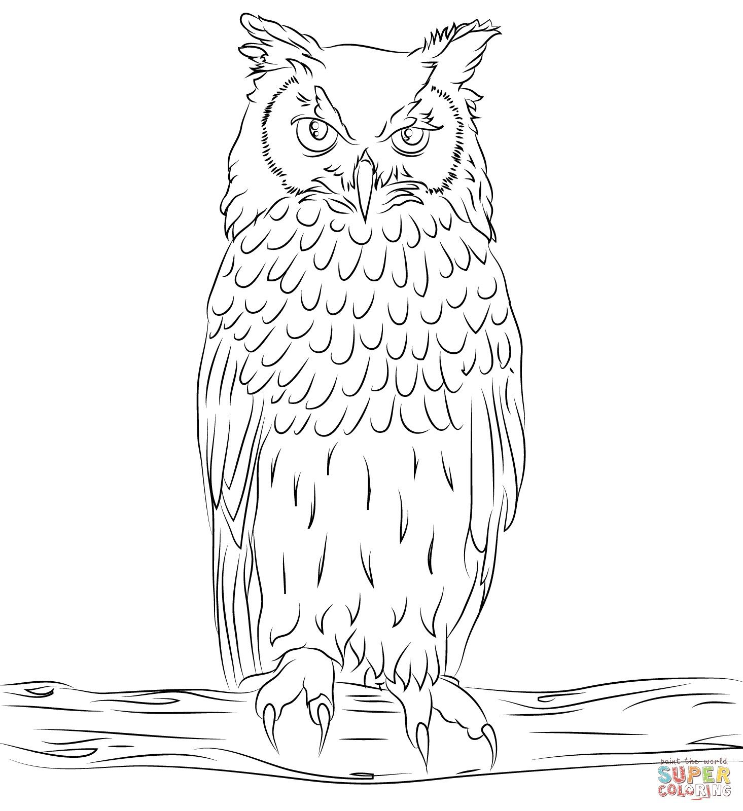 Pin on Owl pages