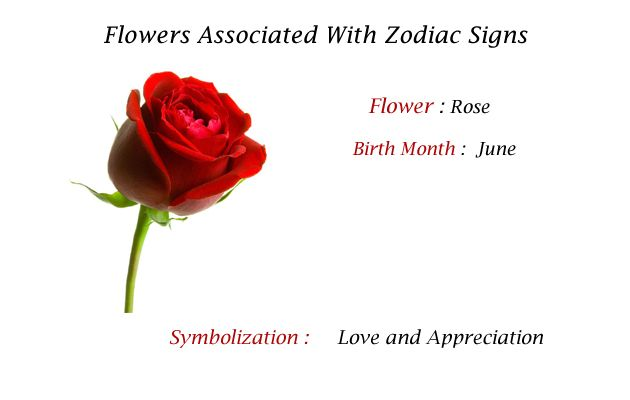 Birth Month Flowers Combined: Pin By Rbs Gifts On Your Birth Month Flower