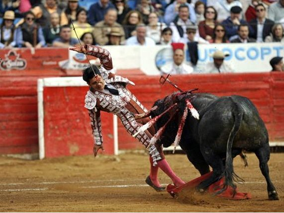 but sometimes the bull wins