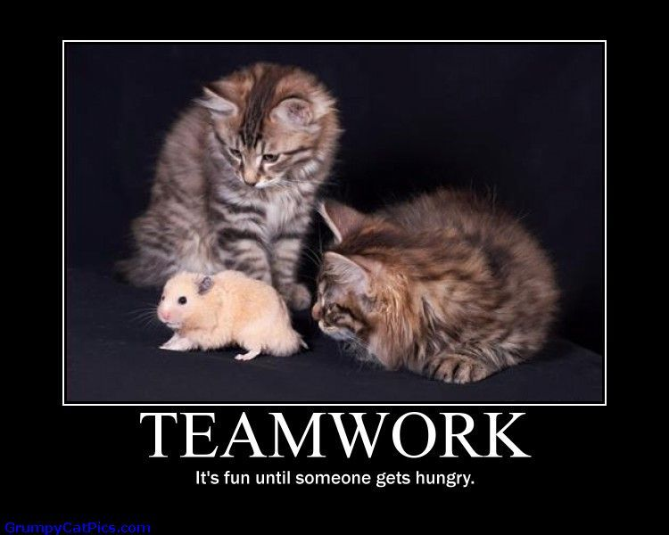 Teamwork Funny Quotes Teamwork, it's fun until | Beauty ...