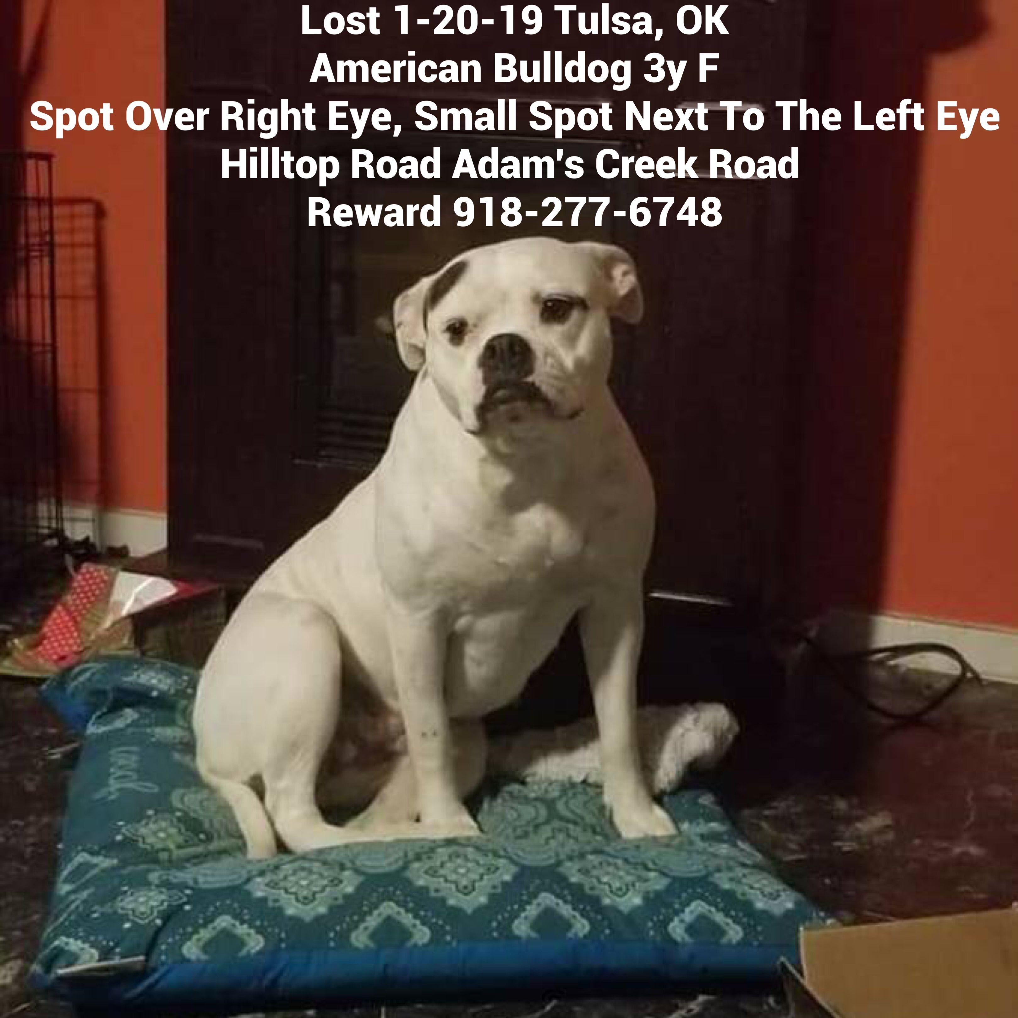 Lostdog 1 20 19 Name Mia Tulsa Ok She Is A Full Blood