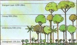 Layer Canopy Understorey Layer Shrub Layer And Forest Floor