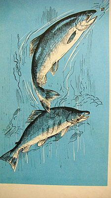 fish hair style vintage blue fish book illustration kokanee by 3461