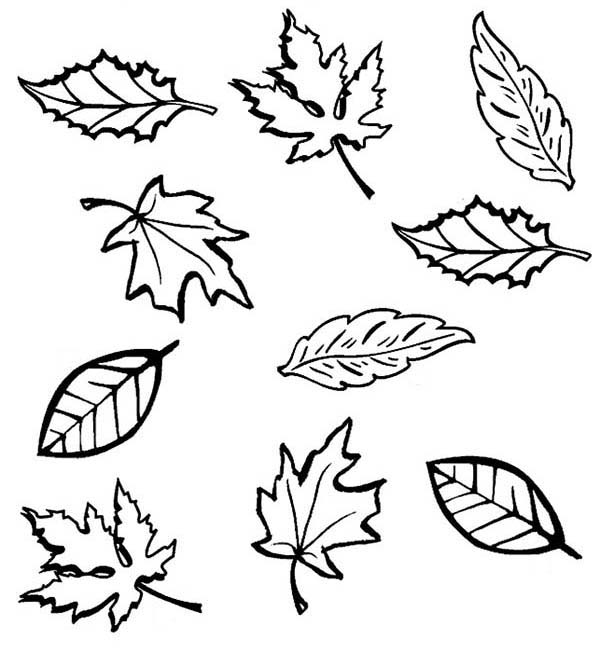 Dry Leaves In Fall Season Coloring Pages Bulk Color In 2020 Leaf Coloring Page Coloring Pages Dry Leaf