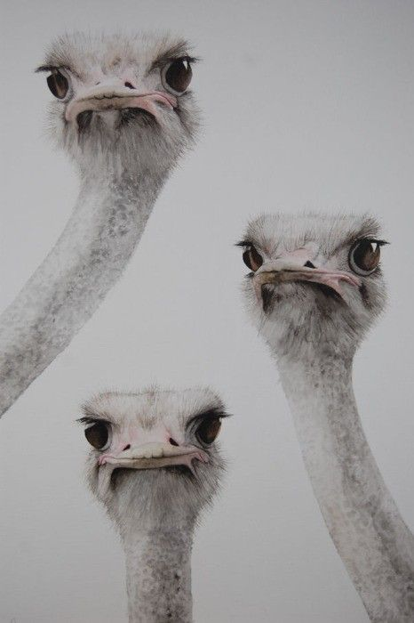 """Try harder - we three are definitely not émused!!""  (It is actually titled 'Still Checking' by wildlife artist Dominique Salm)"