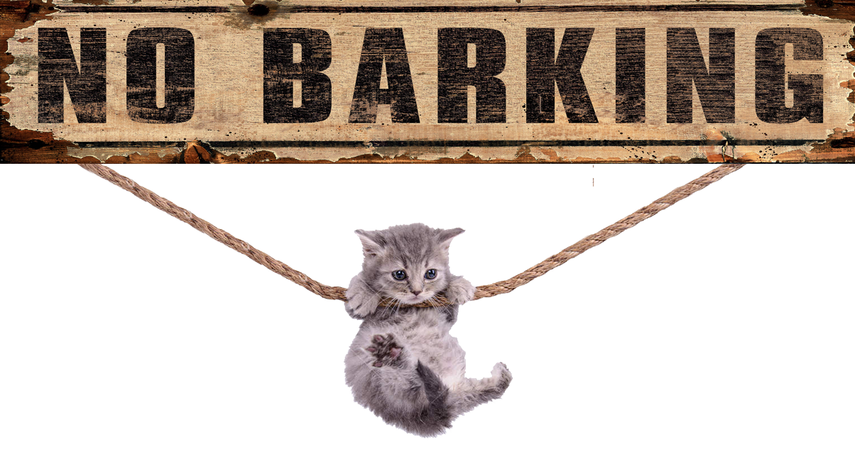 """Dr. Staderman provides a """"bark Free Zone"""" at All Cats Care Center of Webster"""