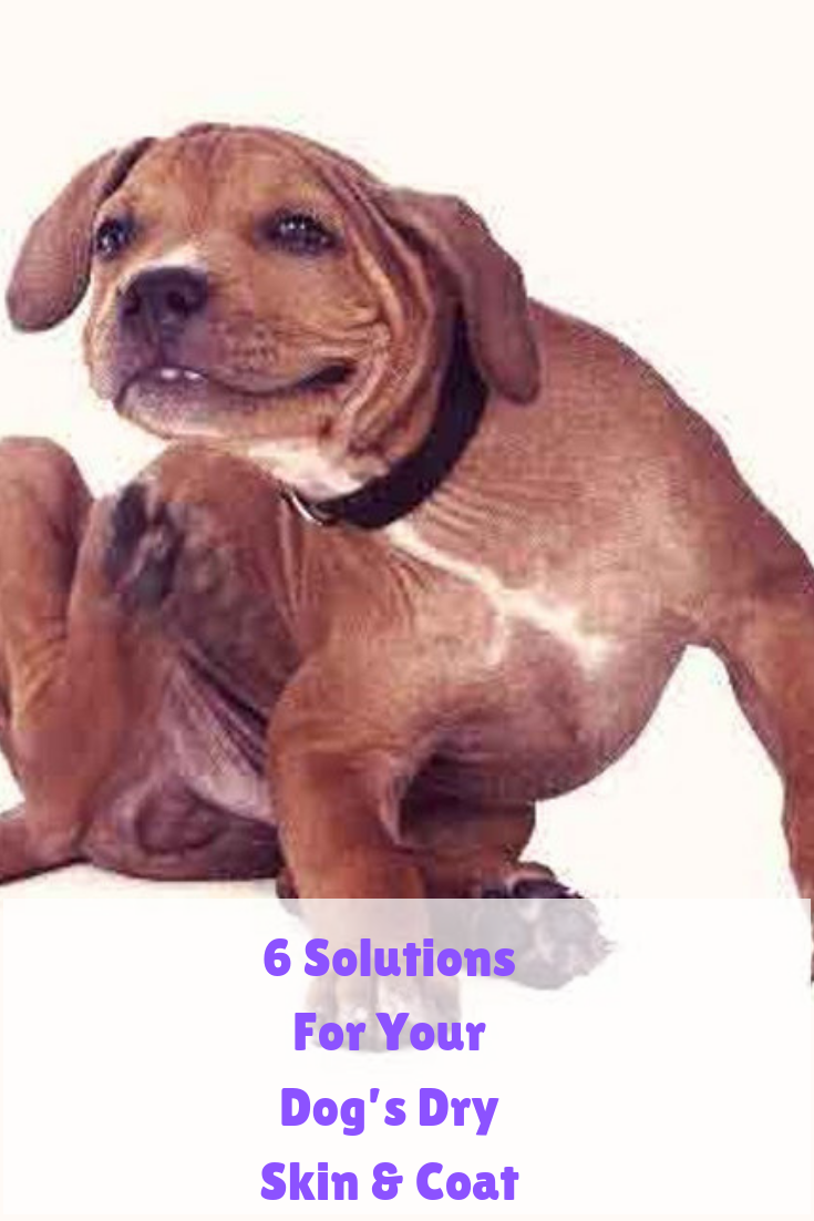 6 Solutions For Your Dog S Dry Skin Coat Dog Dry Skin Your Dog Puppy Training