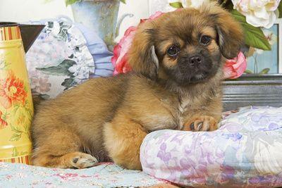 50 Super Cute Puppy Photos Cute Puppy Photos Super Cute Puppies Puppy Photos
