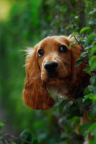 Bardzo dobryFantastyczny fajny pies   LUBIMY   Animales perros, Amo los perros i Perros bellos SQ35