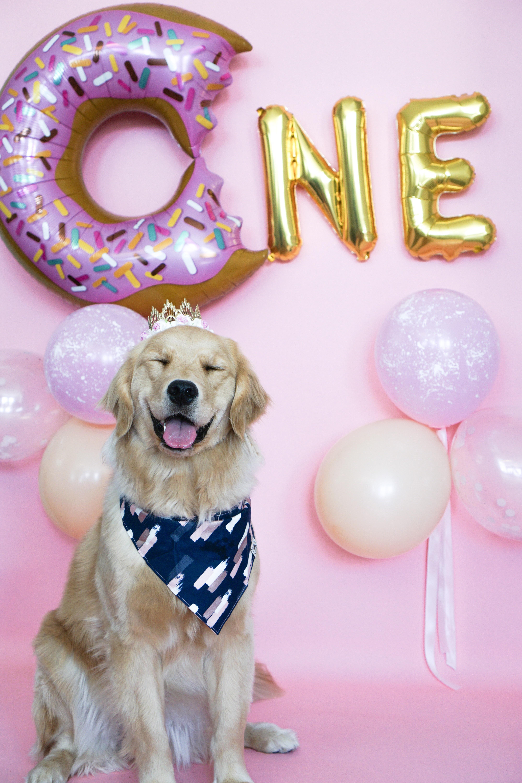 Happy Birthday Girl Dog Birthday Pictures Dog Birthday Dog Birthday Party