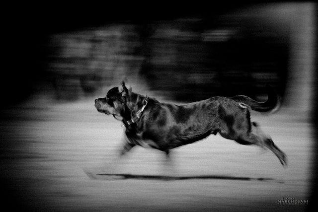 Rott Holga Rottweiler Love Dog Love Big Dogs