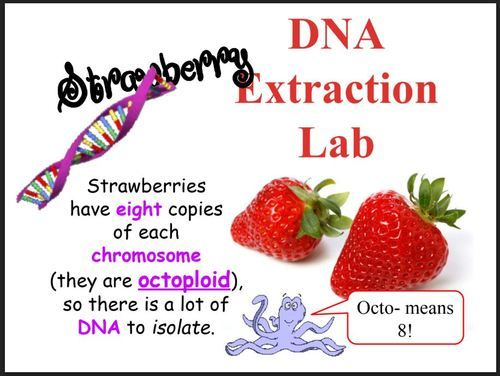 Strawberry DNA Extraction Lab | Dna extraction lab, Dna ...