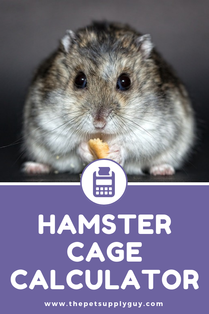 Hamster Cage Size Calculator The Pet Supply Guy Hamster Hamster Cage Dwarf Hamster Care