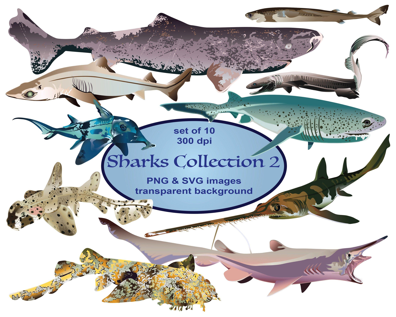 Sharks Clip Art Ocean Clip Art Fish Clipart Animals Etsy In 2020 Animal Clipart Frilled Shark Ocean Animals