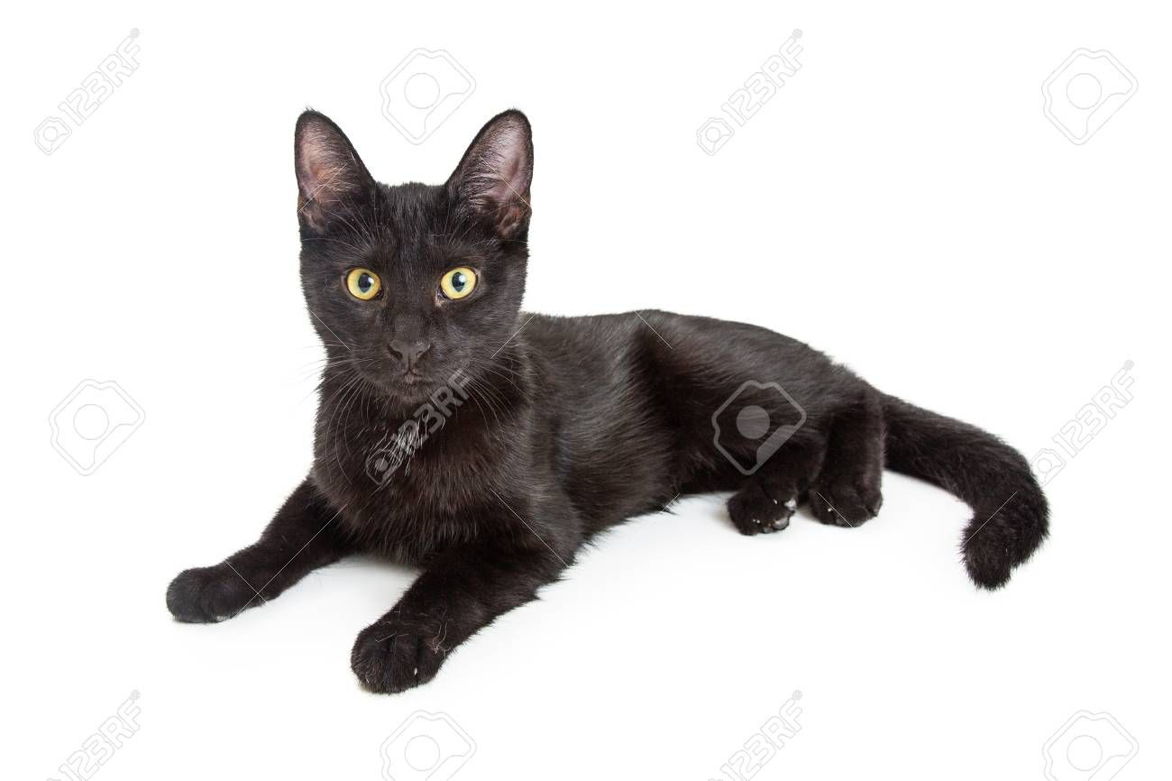 Cute Young Black Kitten Lying Down To Side On White Looking At Camera Sponsored Bla In 2020 Brand Identity Business Cards Black Kitten Professional Business Cards