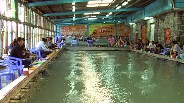 urban shrimp fishing in taiwan bbc one of taiwans best activity indoor poolsbbc