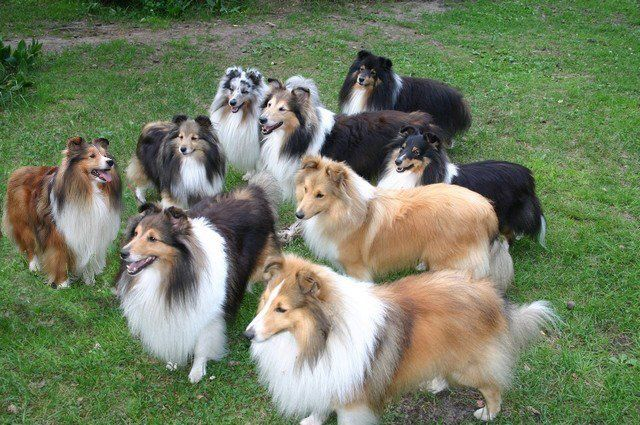 The Pack- that would be a frightening amount of grooming ...