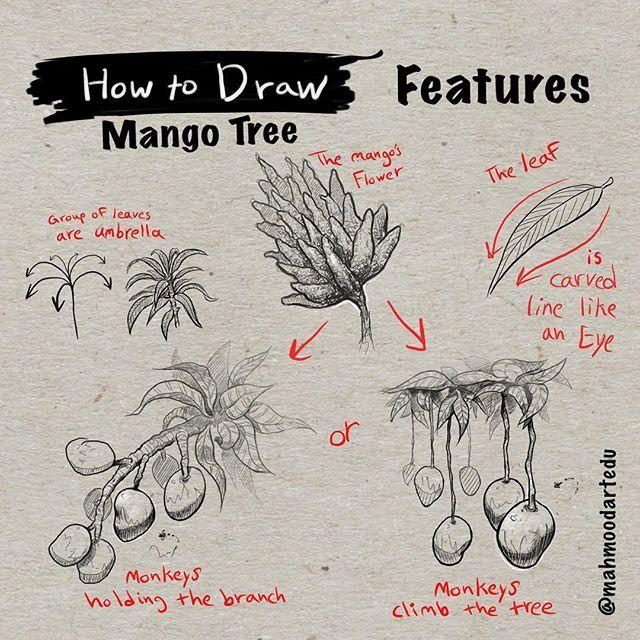 كيف ترسم شجرة المانجو الجزء الرابع المميزات How To Draw Mango Tree Part 4 Features الشرح ١ زهرة المانجو تثمر الما Tree Drawing Tree Sketches Mango Tree