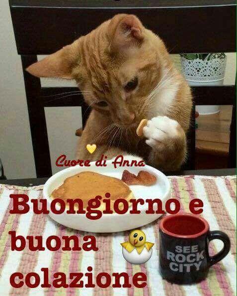 Buongiorno colazione gatto imagens de buongiorno pinterest for Buongiorno con colazione