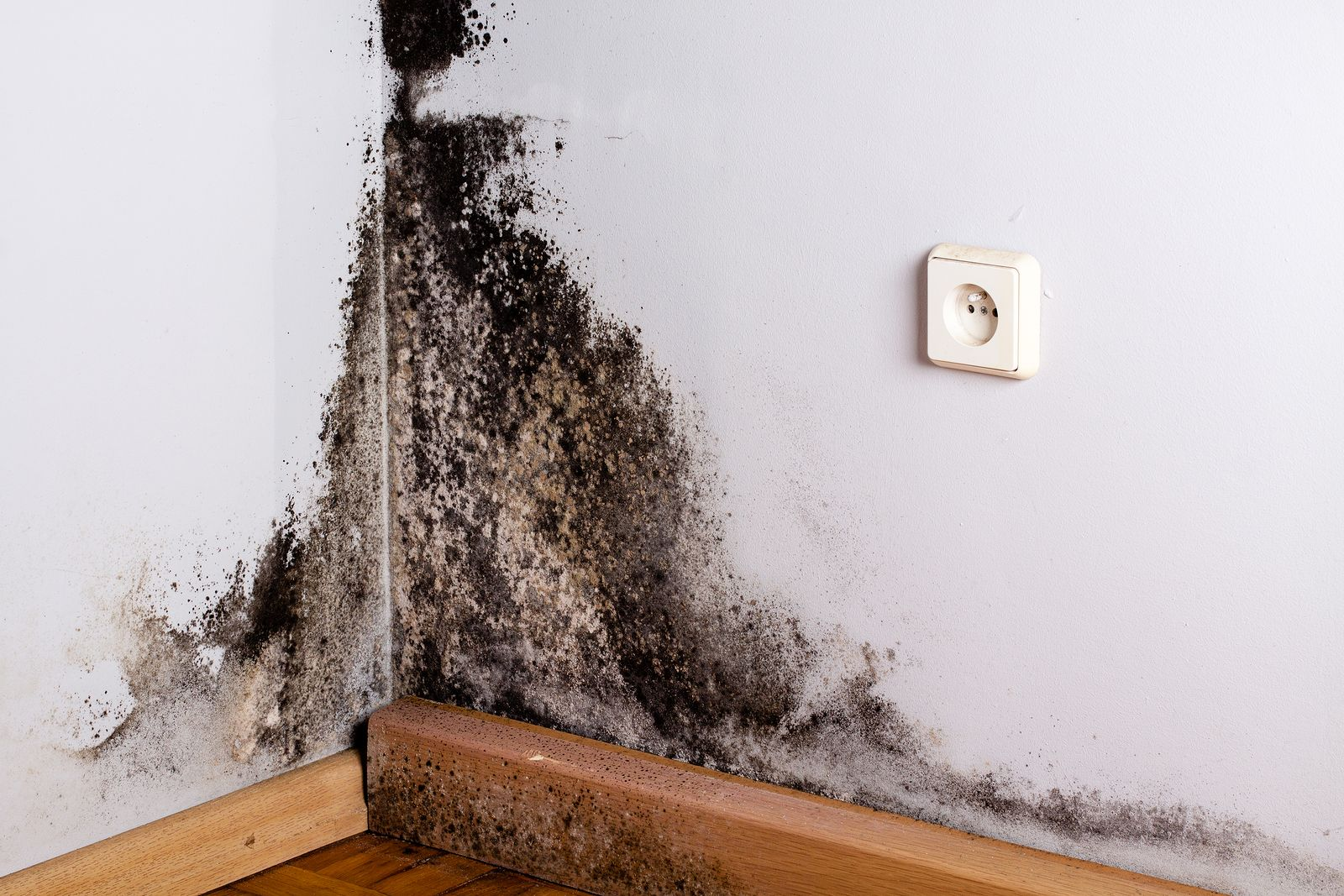 8 Signs You Need A Black Mold Detox Clean Black Mold Mold Remover Mold Remediation