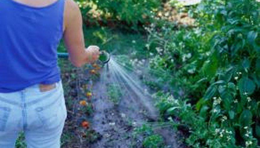 How To Use Cedar Mulch On Veggie Plants Companion Planting Pole Beans Corn Plant