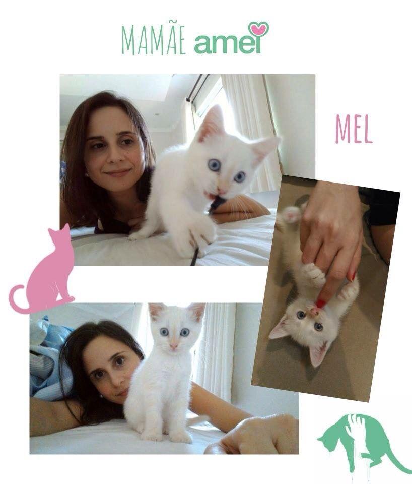 Adotei Virei mamãe de uma gata linda há menos de 3 semanas. A Mel foi uma linda surpresa e que encheu nosso lar de alegrias! O amor que ela demonstra a cada mordidinha, lambida ou rosnada é algo tão gratificante! Adotar um animal e dar a ele uma vida cheio de amor e carinho!!! Mamãe Ju #lojaamei #campanha #historias #muitoamor #adote #diadasmães #instacat