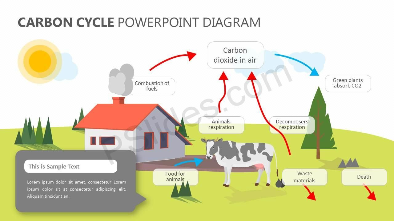 Carbon Cycle Powerpoint Diagram Carbon Cycle Carbon Diagram