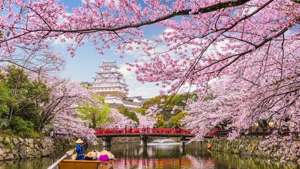 Cherry Blossom Lake Sakura Japan Photo Credit To Sean Pavone 3840 X 2160 Wallpaper Cherry Blossom Wallpaper Desktop Photography Anime Cherry Blossom