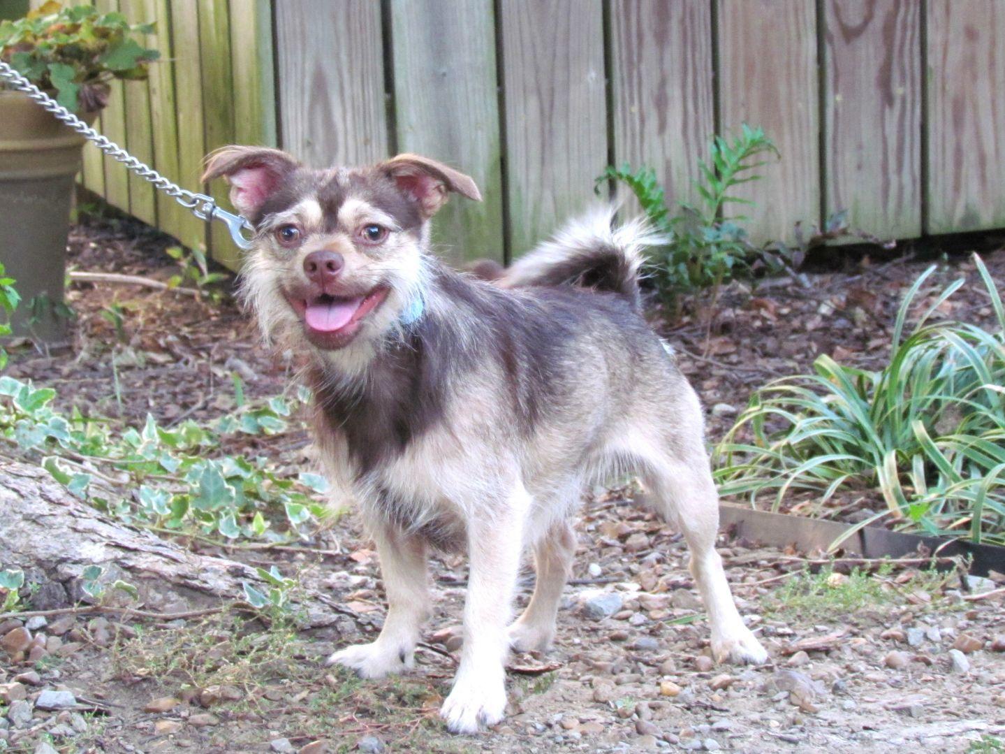 Adopt Charlie On Petfinder Dog Adoption Pets Pet Adoption